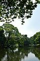 Kings Lake - Indian Botanic Garden - Howrah 2012-09-20 0072.JPG