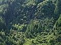Knuttental, Valle dei Dossi - panoramio (11).jpg