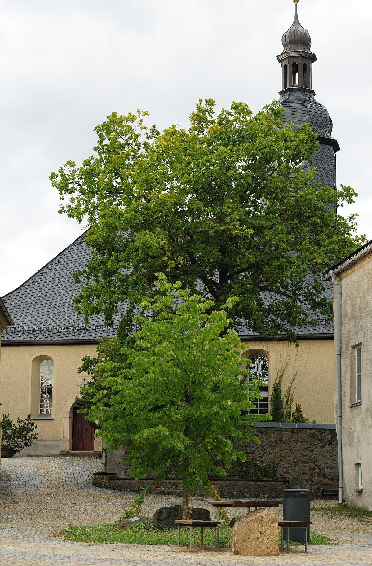 Jacobikirche (mit Ausstattung), Kirchhof mit Einfriedungsmauer und Grabstein Hermann Vogel