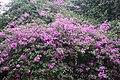 Kunming City Zoo Floweres (9964737586).jpg