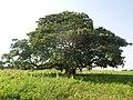 L'arbre de Vie.jpg