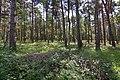 LSG Forst Rundshorn nahe Würmseeweg IMG 0160.jpg