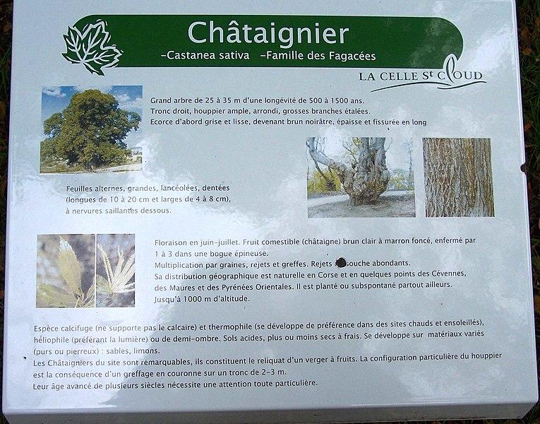 Panneau d'information sur le châtaignier au site de Tournebride à la Celle-Saint-Cloud (Yvelines, France)