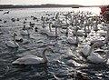 Lake Tofutsu1a.jpg
