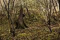 Landschaftsschutzgebiet Nagoldtal (8 Teilgebiete), Kennung 2.35.037, Lützengraben, Wildberg 17.jpg