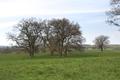 Lauterbach Frischborn Eisenbach Auhof Quercus Pasture W.png