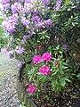 Le rose et le violet - panoramio.jpg