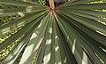 Leaf (4384358089).jpg
