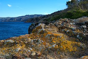 Lichen encrusted rocks adorn the cliffs of Santa Cruz Island.jpg
