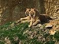 Lion et lionne couple.jpg