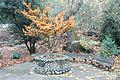 Lithia Park - Ashland, Oregon - DSC02679.JPG