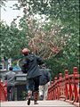 Livreur sur le pont du Soleil Levant (Hanoi) (4353795830).jpg