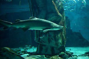 Sea Life London Aquarium - Shark Walk