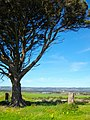 Lone Tree overlooking McLaren Vale - panoramio.jpg