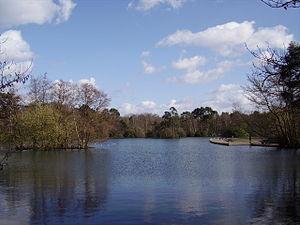 California Country Park - Longmoor Lake at California Country Park