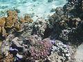 LordHoweIsland NorthBay Reef 09.JPG