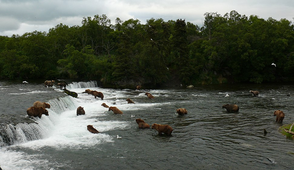 Lots and lots of bears at Brooks Falls (cropped)