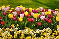 M^m Flores en el parque en la Haya - Creative Commons by gnuckx - panoramio.jpg
