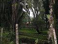 Mérida - Caminando entre montañas.jpg
