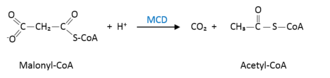 Malonyl-CoA decarboxylase - Reaction by which MDC transforms malonyl-CoA into acetyl-CoA