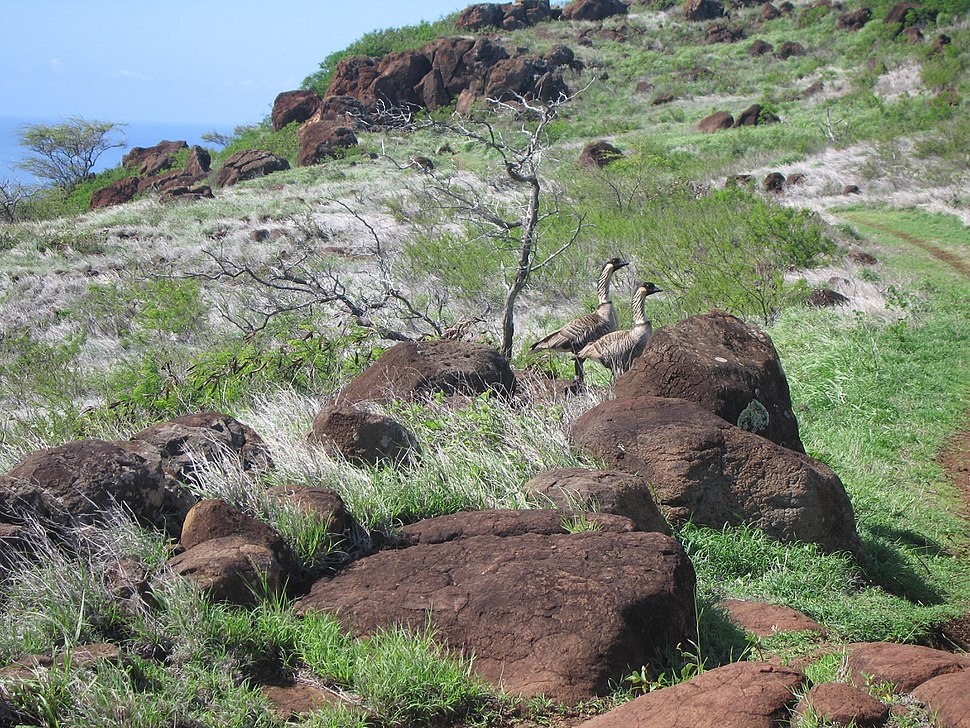 Maalea, Maui on the Pali Trail, 2005