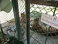 Mae Raem, Mae Rim District, Chiang Mai 50180, Thailand - panoramio (4).jpg