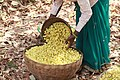 Mahua collection.jpg