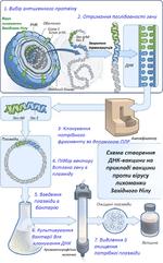 Схема створення ДНК-вакцини