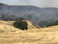 Malech Fire 6.9.19.png