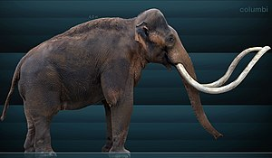 History of Rocky Mountain National Park - Restoration of a Columbian Mammoth