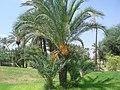 Marrakesh - 2008 - panoramio (69).jpg