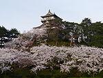 Maruoka-jo Sakura.JPG