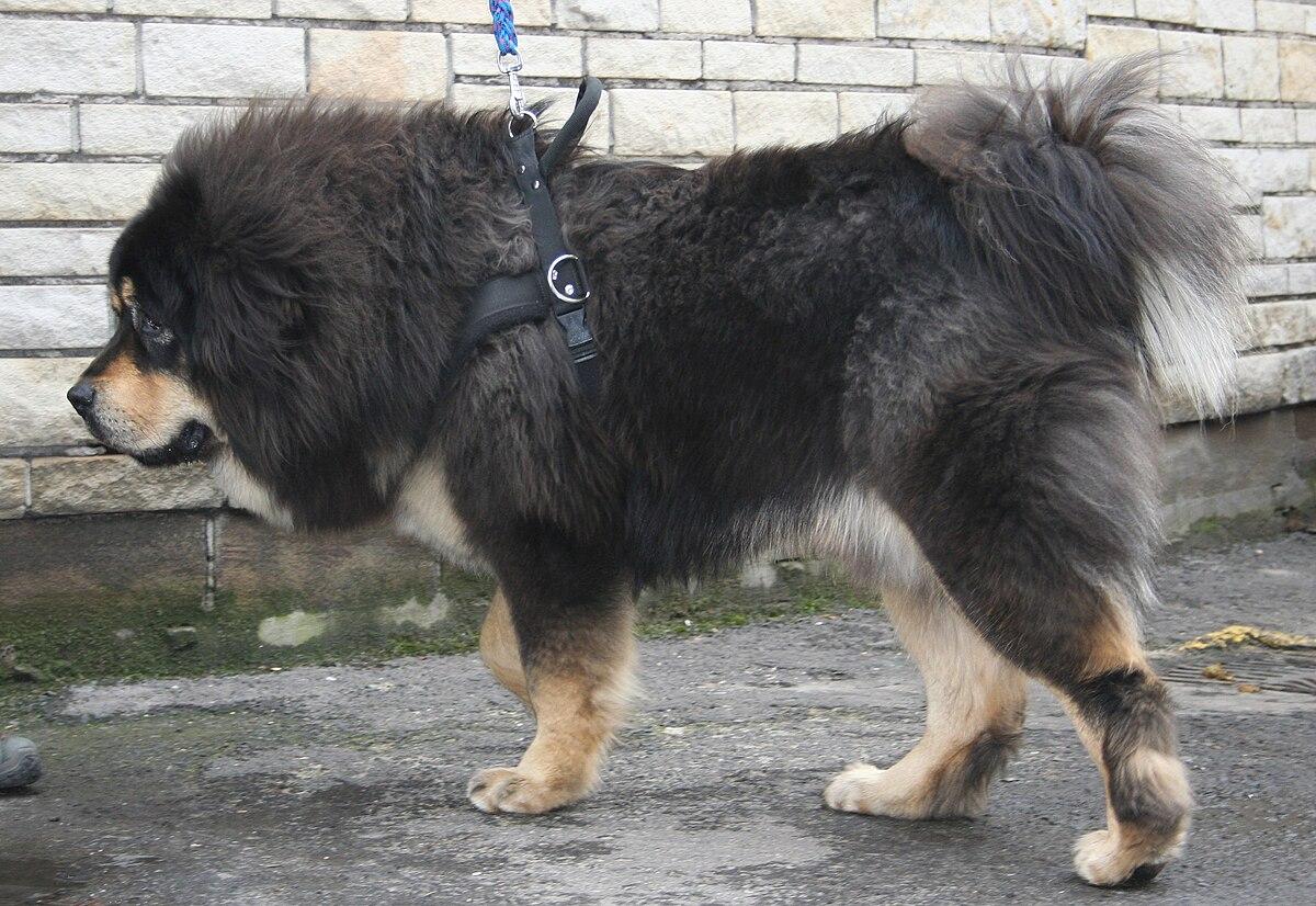 Black Dog Rescue Pet Adoption Event