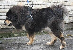 Dog Growing Small Warts On Head