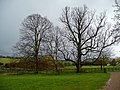 Mature trees at Jenningsbury Farm - geograph.org.uk - 723780.jpg