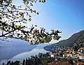 Moltrasio, Lake Como - the Spring of our hope.jpg