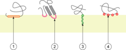 Monotopic membrane protein.png
