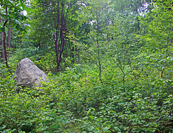 A pointed gray rock on the left of the image amid dense underbrush and immature trees