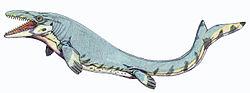 Reconstitution d'un Mosasaurus beaugei