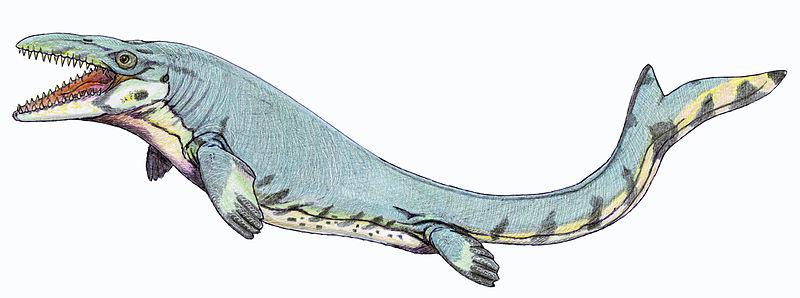 http://upload.wikimedia.org/wikipedia/commons/thumb/1/14/Mosasaurus_beaugei1DB.jpg/800px-Mosasaurus_beaugei1DB.jpg