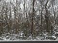 Mount Vernon District Park, snowy day post-Snurlough.jpg
