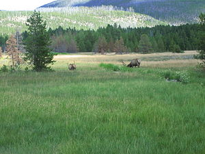 English: Mountain meadow at Yellowstone Nation...