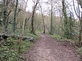Muddy path in Withdean Stadium Woods (geograph 3822882).jpg