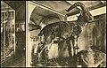 Museum of Zoology SPb 000000501 1 m.jpg