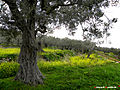 Nablus 9.jpg
