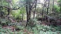 Nainital, Uttarakhand, India - panoramio - Vipin Vasudeva (7).jpg