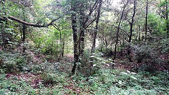 Terai - Jungle in Uttarakhand