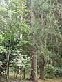 Nairobi Arboretum Park 19.JPG