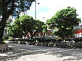 Nathan Road TST Section Trees 201007.jpg