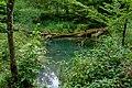 Naturbëschreservat «Beetebuerger Bësch»-109.jpg